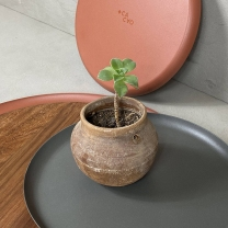 Cacao Design_06